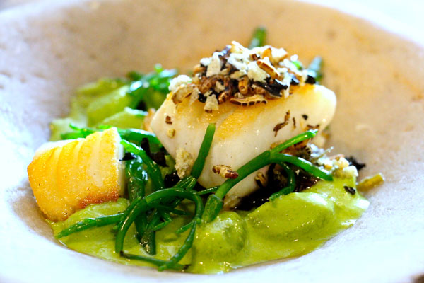 The Dairy cod
