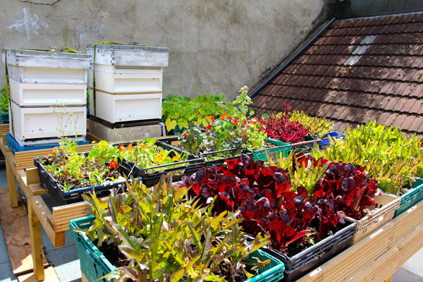 The Dairy rooftop garden